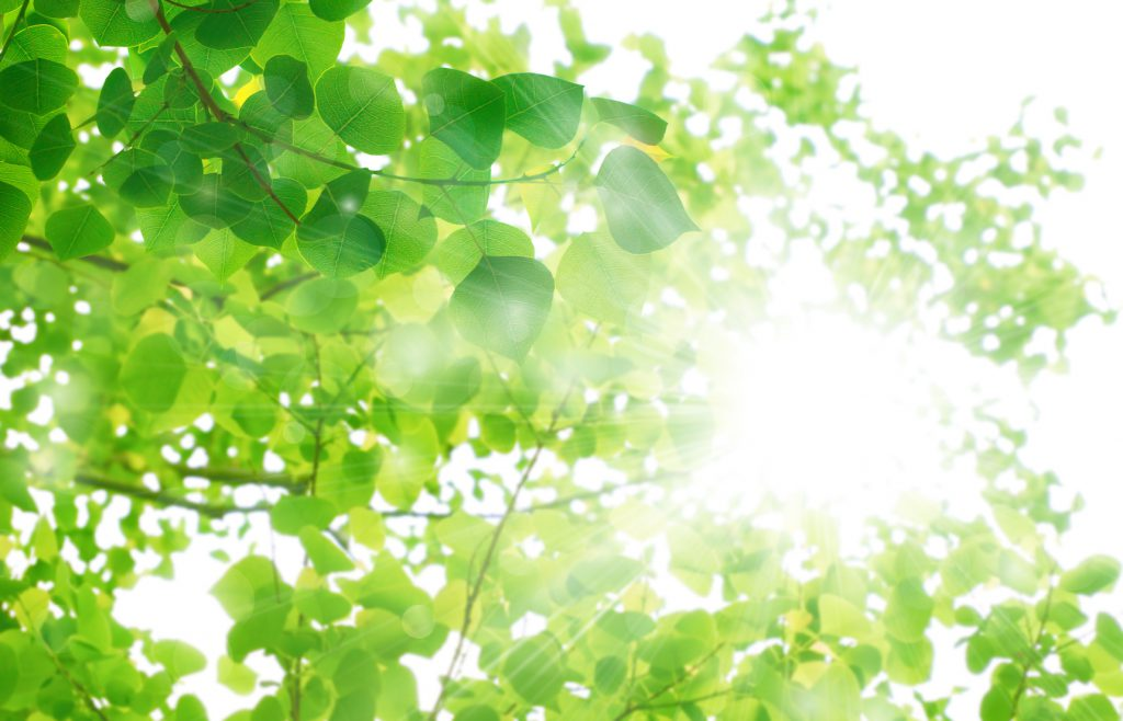 ず 森 見 意味 見 て を を 木