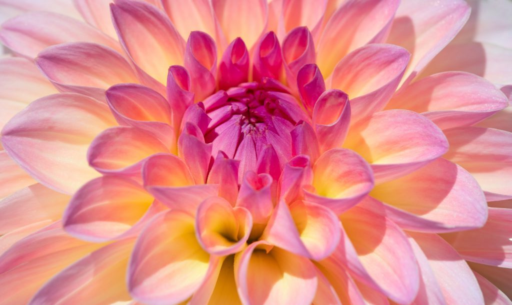 立てば芍薬座れば牡丹歩く姿は百合の花」の意味と適切な使い方 | TRANS.Biz