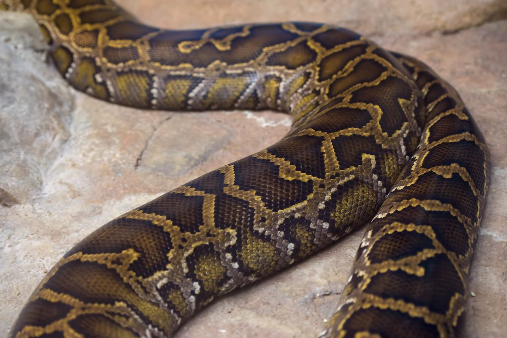 「蛇の道は蛇」の意味とことわざの使い方!類語も紹介(例文 ...
