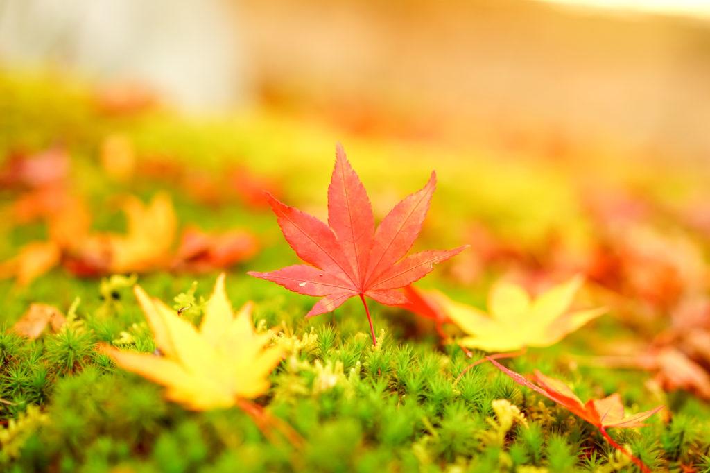 季節 の 挨拶 11 月 下旬