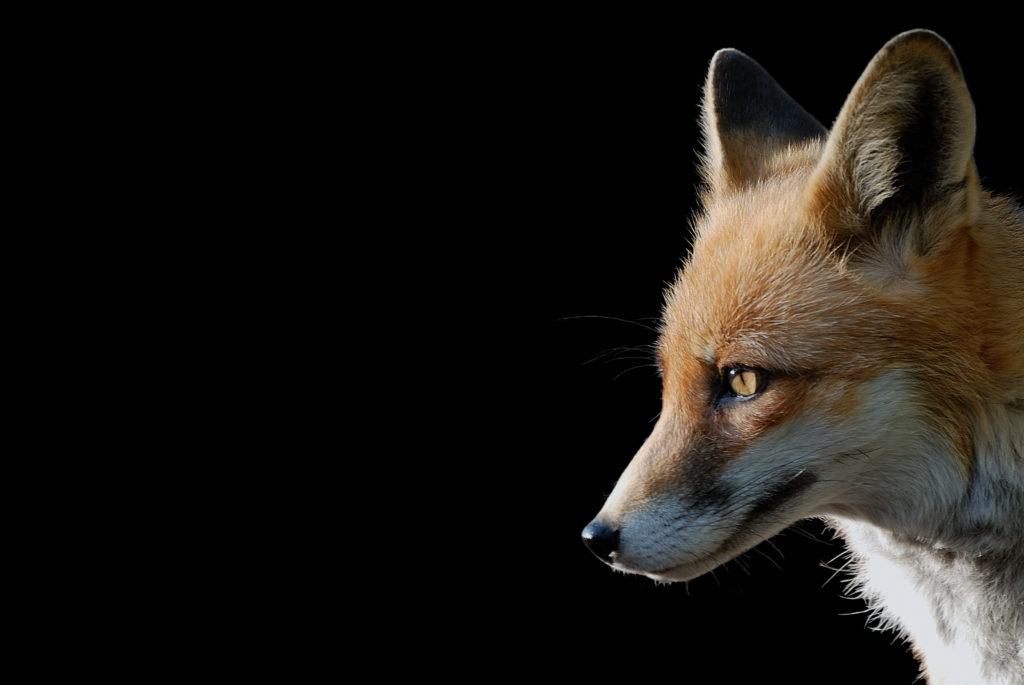 を 威 狐 借る の 意味 虎